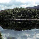 Midday reflection by nealbarnett