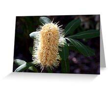 Banksia Candle 2 Greeting Card