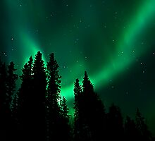Northern Lights in our Yard # 2 by peaceofthenorth