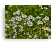 In a Field of White Canvas Print