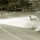 Deer Around The Bend by Tracy Riddell