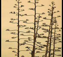 Two birds  by Miro Slavin