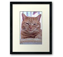 Ginger cat portrait Framed Print