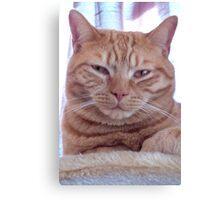 Ginger cat portrait Canvas Print