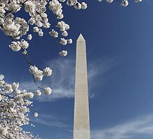 Cherry Blossoms and the Washington Monument by John Wright
