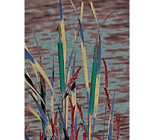 cat tails of a different kind Photographic Print