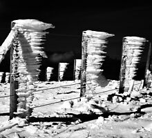 Frozen Fence by Andrew Ness - www.nessphotography.com