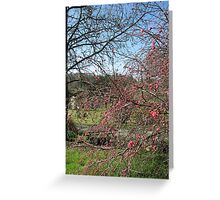 Weeping Peach Greeting Card