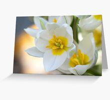 Dwarf tulips Greeting Card
