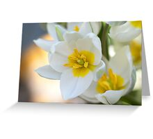 Dwarf tulips Greeting Card