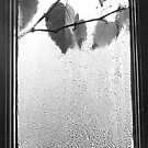 Leaves on Window by Selsong