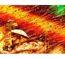 Rain Magic Photographic Print