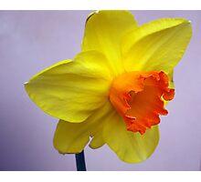 Bright daffodil Photographic Print