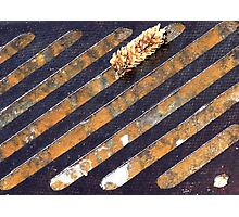 pine cone over a sewer Photographic Print