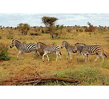 Zebras Photographic Print