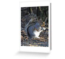 Grey Squirrel. Greeting Card