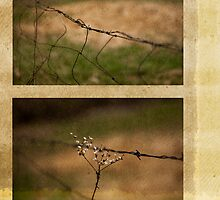 Barbed Wire Diptych by Rene Hales