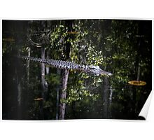 """""""Alligators may live here"""" Poster"""
