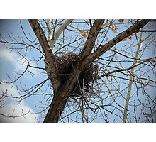 Nest ~ Beus Pond Photographic Print