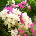 A photo of flowers that i captured in Turkey - Bodrum. by Emma  Kelly