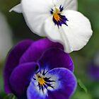 Violas by Martina Fagan