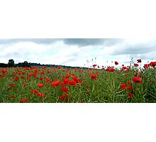 Poppies in a Kentish field Photographic Print