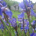 purple flowers by Emma  Kelly