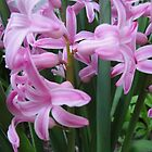 Pink again! by porksofpig