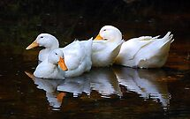 Three Ducks by Gayle Dolinger