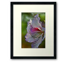 Loving the light... Framed Print