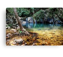 LIVING RAINFOREST Canvas Print
