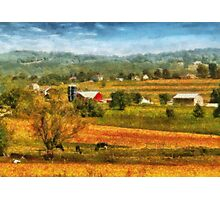 Country - Cows Grazing Photographic Print