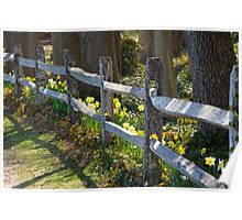 A Daffy Fence Poster
