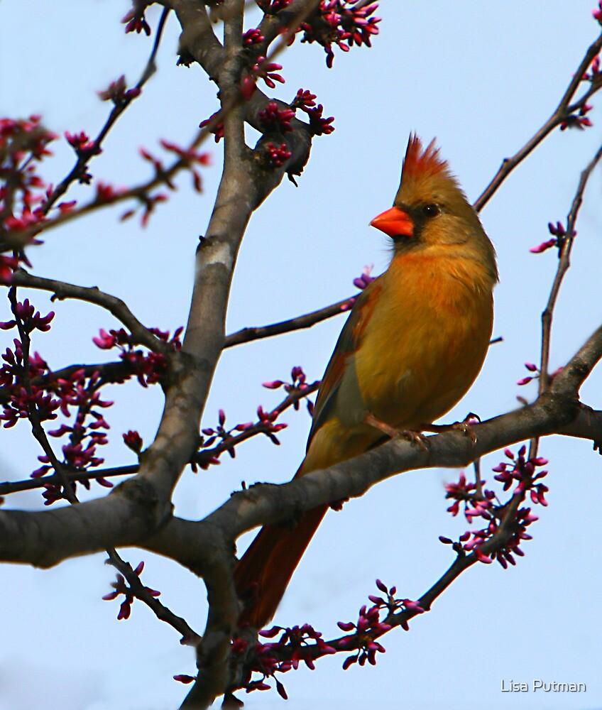 Lady Cardinal by Lisa G. Putman