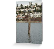 Seagull Yoga Colour Greeting Card