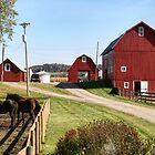 Red Barns by Nadya Johnson