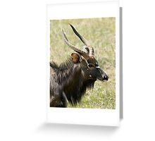 Male Nyala Close Up Greeting Card