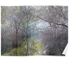Amongst the reeds, Lake McKenzie Poster