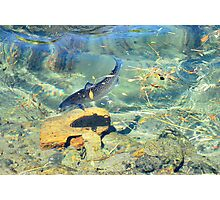 The thin blue line, catching Salmon Photographic Print
