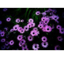 Fluttering Purple Photographic Print