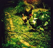 chickens in the garden by Sally McColl