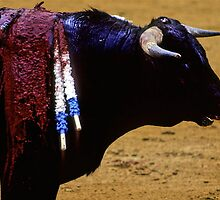 Bullfighting−1、SPAIN by yoshiaki nagashima