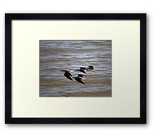 Black-Necked Stilts At Salton Sea Framed Print