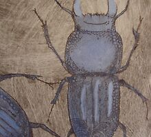Mt Mangana Stag Beetle II by jobanana