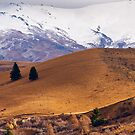 A South Island landscape by Fineli