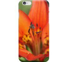 Wood Lily, Jasper National Park, Alberta, Canada iPhone Case/Skin