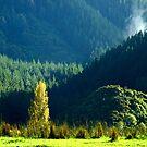 Herald of autumn in an evergreen valley. UpperHutt , New Zealand by Fineli