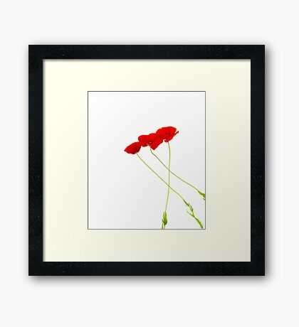 Flanders Poppies v1 Framed Print