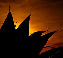 Opera House Potplant by Christopher M Tsorotes