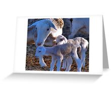 PRIVATE COLLECTION TWO - My sheep Greeting Card